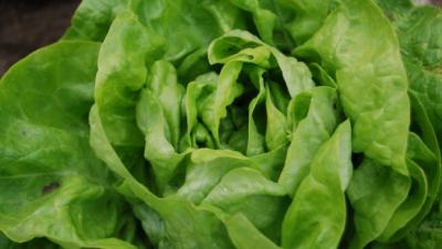 Cum alegi cea mai bună salată verde. Trucul pe care puţini îl ştiu