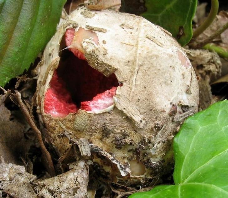 A găsit acest ou ciudat în grădină. Când a văzut ce iese din el, a înlemnit!