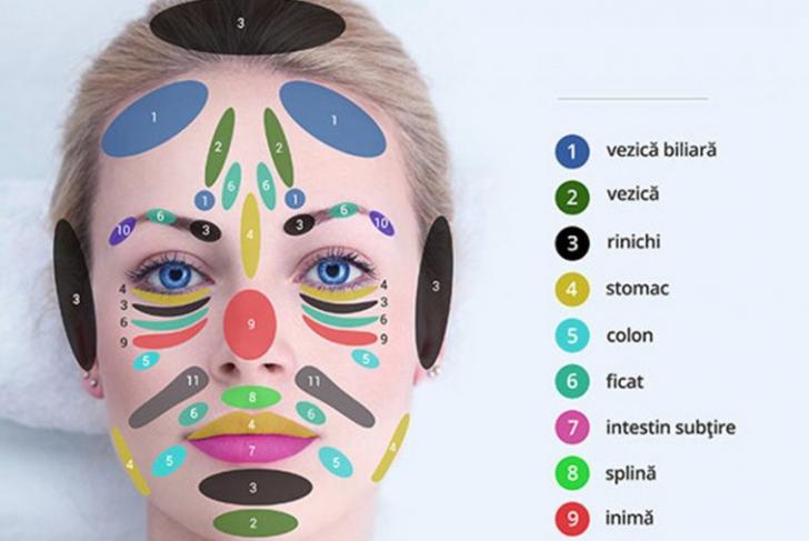 Harta nevăzută a feţei: Cele 11 zone care-ţi reflectă sănătatea pe chip