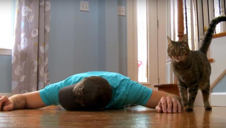 """Stăpânul s-a prăbușit """"mort"""" în fața pisicii. Și atunci, felina a făcut ceva incredibil -- VIDEO"""