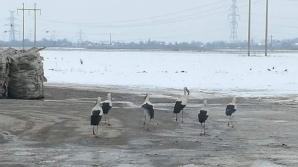 Berzele au ajuns la Focșani în plină iarnă