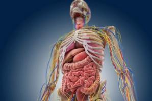 Un organ nou a fost identificat în corpul uman. Joacă un rol crucial în răspândirea cancerului