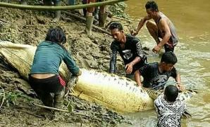 """Descoperire înfiorătoare în burta unui crocodil de 7 metri! """"""""Nici în cele mai negre vise..."""""""