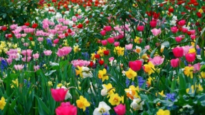 Cum va fi vremea de Florii şi de Paştele catolic - ce spun meteorologii