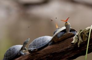 Fotografii ULUITOARE făcute la momentul potrivit. Dovada că natura face spectacol!