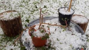Alertă meteo de ultimă oră: COD GALBEN de furtuni şi grindină - HARTA