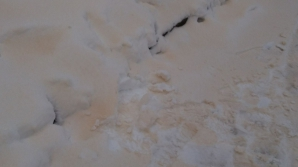 Atenţionare de la medici. Zăpada portocalie este periculoasă pentru oameni