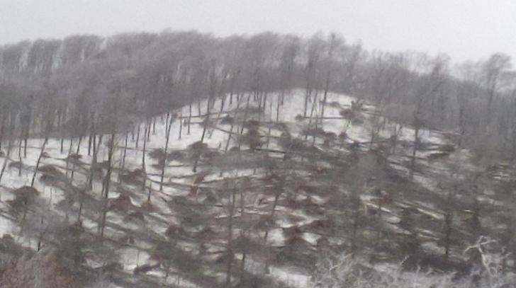 Dezastru în Satu Mare: Păduri puse la pământ de vânt