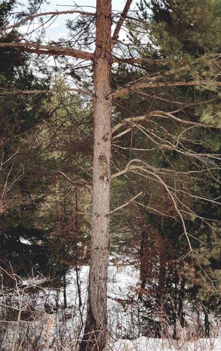 Poza fantastică făcută într-o pădure din România. Găsește animalul ascuns în cadru!