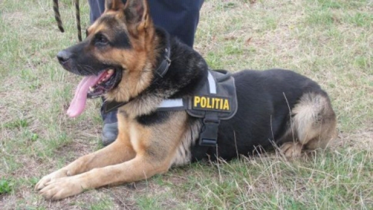 Grija PNL. Pensii pentru caii şi câinii Poliţiei, Jandarmeriei, Armatei, după ieşirea din activitate