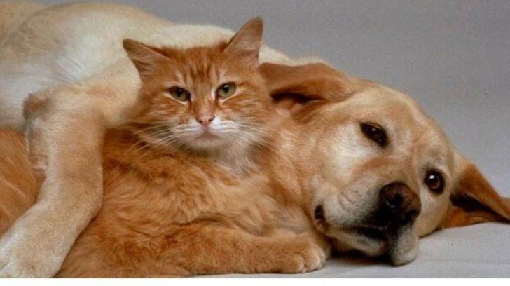 Pisicile şi câinii fără pedigree, cu stăpân, vor fi sterilizaţi gratuit