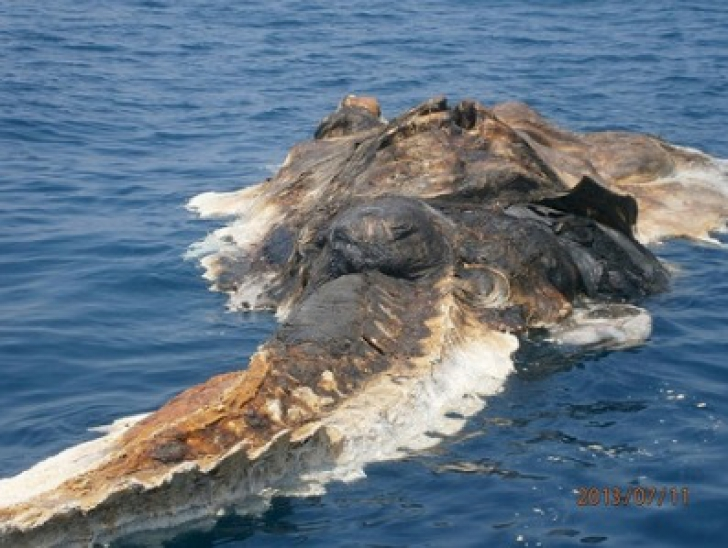 Înfiorător! Marinarii au scos din adâncuri o creatură misterioasă. Au îngheţat de spaimă! Ce era