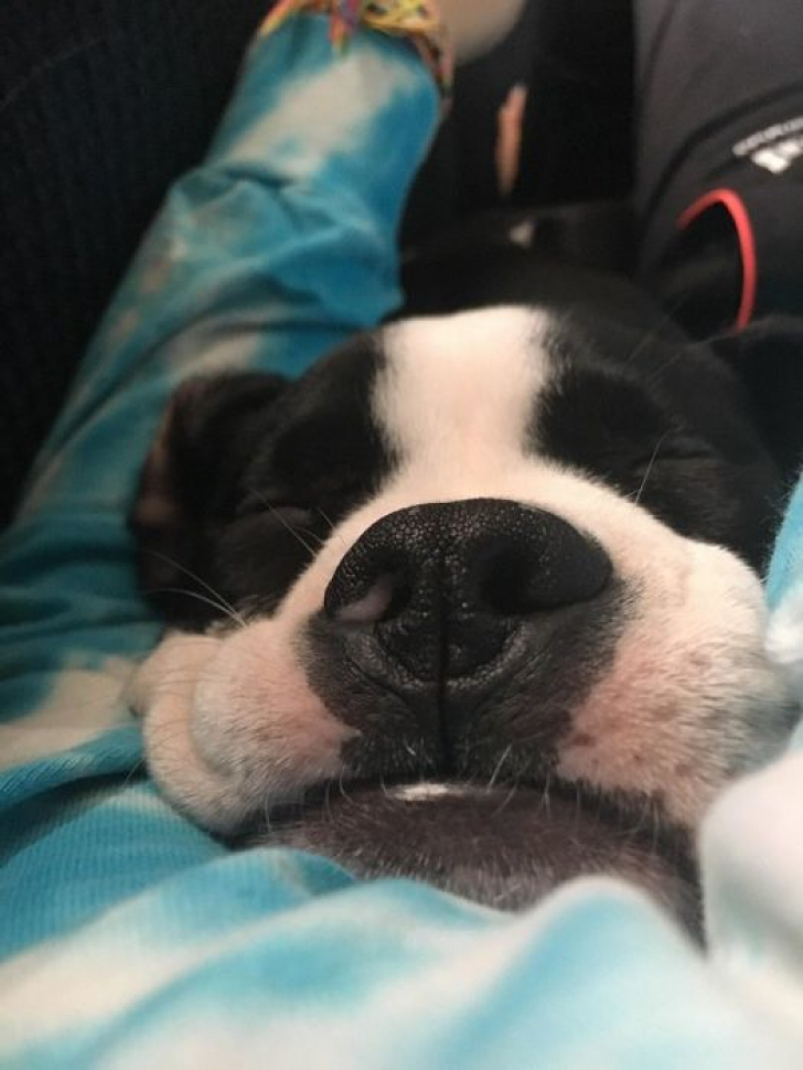 Nu trezi animalele care dorm