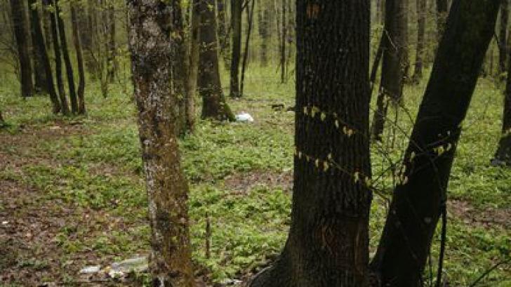 Schweighofer vinde pădurile pe care le deținea în România