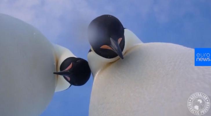 IMAGINE RARĂ: Doi pinguini își fac selfie