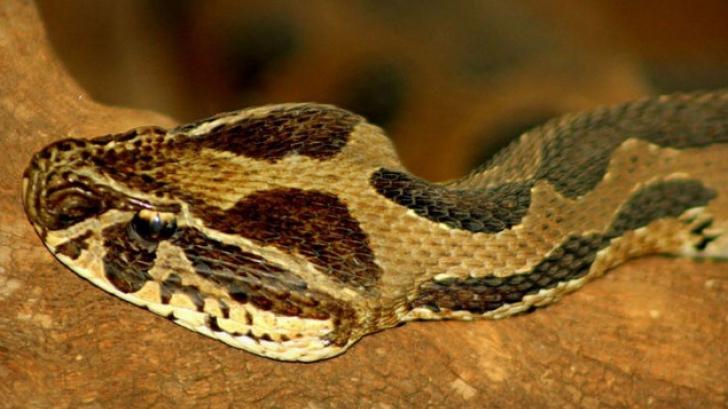 Muşcat de şarpele veninos, a luat mâna soţiei şi şi-a înfipt dinţii, pentru a muri împreună. Apoi...