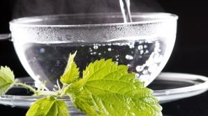 5 plante care țin glicemia sub control
