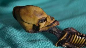 Misterul scheletului mumificat din Chile a fost elucidat