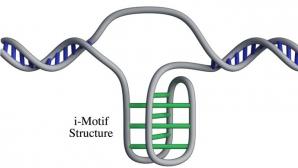 O nouă structură ADN, descoperită de cercetători