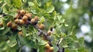 Afecţiuni grave care pot fi tratate de arborele vieţii