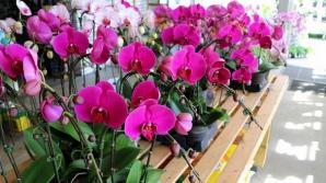 Aşa înmulţeşti cu succes orhideea. Trucul care o face să înflorească tot timpul