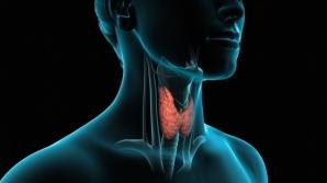 Testul rapid care îţi spune dacă tiroida funcţionează normal