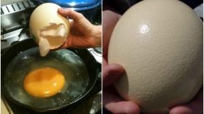 Ouăle de struţ se găsesc şi în supermarketurile de la noi. Cum se pot găti