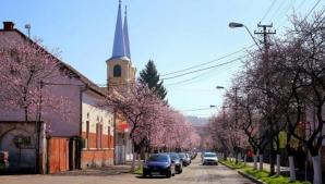 Strada înflorită care i-a fermecat pe români. Acesta e locul de poveste al amatorilor de selfie-uri / Foto: ziare.com