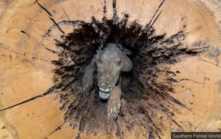 Au tăiat copacul, dar ce au găsit înăuntru le-a îngheţat sângele în vene! Cum a fost posibil