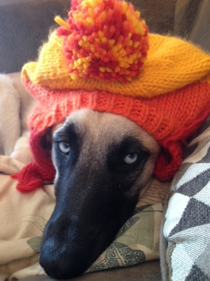 Atenţie, câine rău! DOVADA că animalele ştiu totul despre tine. Şi nu întotdeauna le place ce văd