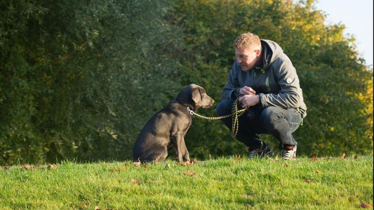 Ce înseamnă dacă vorbești cu animalele de companie așa cum ai vorbi cu copiii
