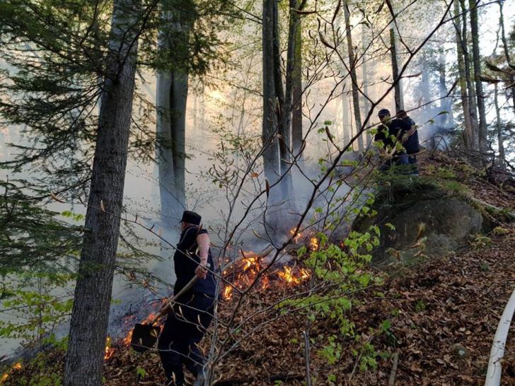 <p>Incendiu violent într-o pădure din Bacău! 175 de oameni intervin - pericol de EXPLOZIE / Foto: ISU Bacau</p>