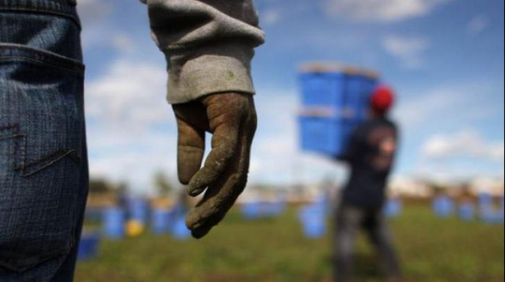 Patru români, sclavi în Sicilia. Patronul îi obliga să muncească 13 ore pe zi