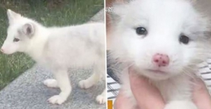 """""""Acesta NU este un câine!"""". Femeia a îngheţat când a aflat ce crescuse, de fapt, în casă"""