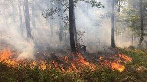 INCENDIU de vegetaţie în Munţii Ciucaş: Zeci de pompieri intervin pentru stingerea focului
