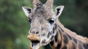 Doliu în lumea filmului! Cineast celebru, mort după ce a fost lovit de o girafă