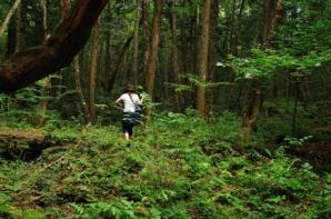 Cea mai terifiantă pădure din lume ascunde un secret oribil! Poliţia nu mai face faţă! Copacii...