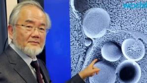 Dieta japonezului laureat cu premiul Nobel: ajută la scăderea în greutate şi la regenerarea celulară