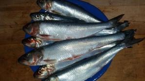 Peştele miraculos care îţi curăţă vasele de sânge de colesterol / Foto: info-delta.ro