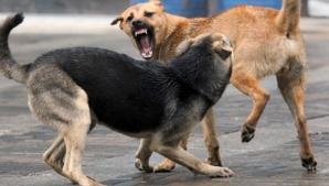 Câini ucigași pe străzi
