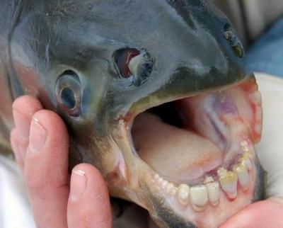 """A mers la pescuit, a simţit """"trofeul"""" în undiţă. A tras tare, ŞOC! Prinsese monstrul din coşmaruri"""