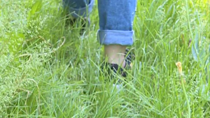 ATENŢIE! Tot mai mulţi oameni sunt muşcaţi de căpuşe