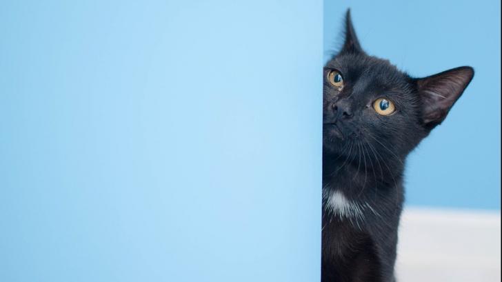 De ce privesc îndelung pisicile la un perete gol