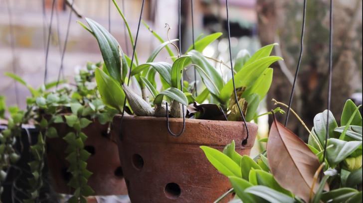 Planta pe care ar trebui să o ai mereu în casă