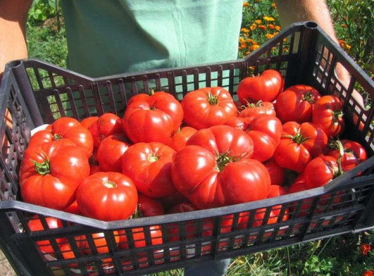 Cum deosebeşti roşiile româneşti de cele de import