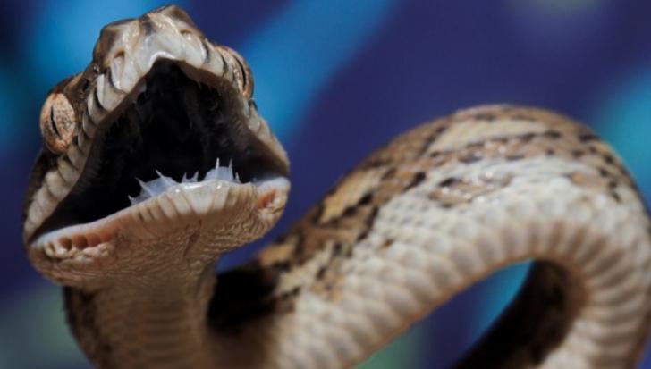 Muşcat de şarpele veninos, a luat mâna soţiei şi şi-a înfipt dinţii, să moară împreună... Ce a urmat