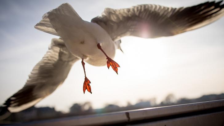 Păsări cu dinți