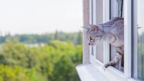 Ai animal de companie? Ţine fereastra închisă! Ce se poate întâmpla este extrem de grav