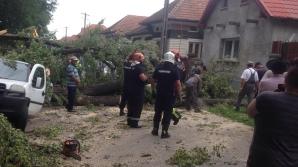 <p>Copac căzut peste o mașină în Brașov</p>