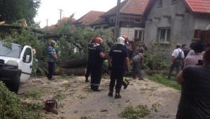 Doi copii şi bunicii lor, răniţi după ce a căzut un copac peste ei